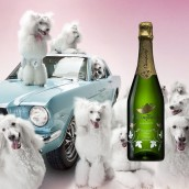 dogs wine and mustang car